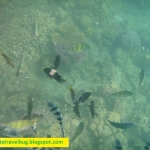 Dos Palmas Palawan – Snorkelling Near The Mangroves