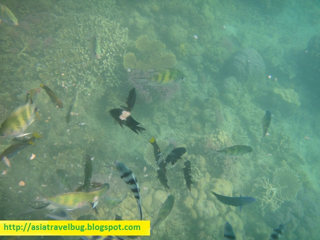 Snorkelling with fishes at Dos Palmas