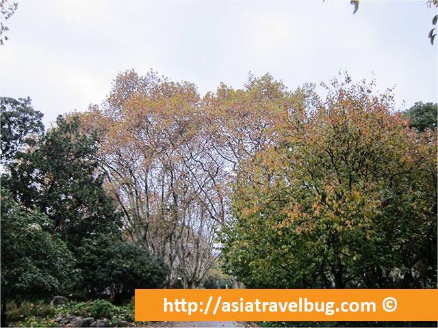Fuxing Park Autumn View