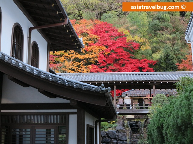 Fall foliage in Kyoto, Japan