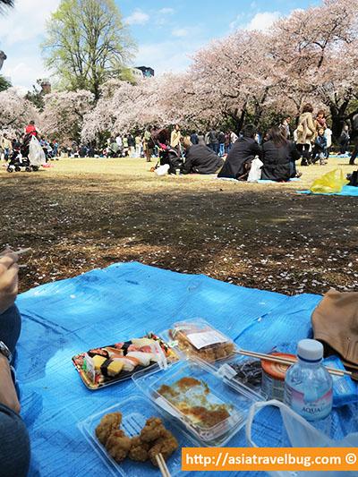 shinjuku gyoen hanami | shinjuku | best area to stay in tokyo