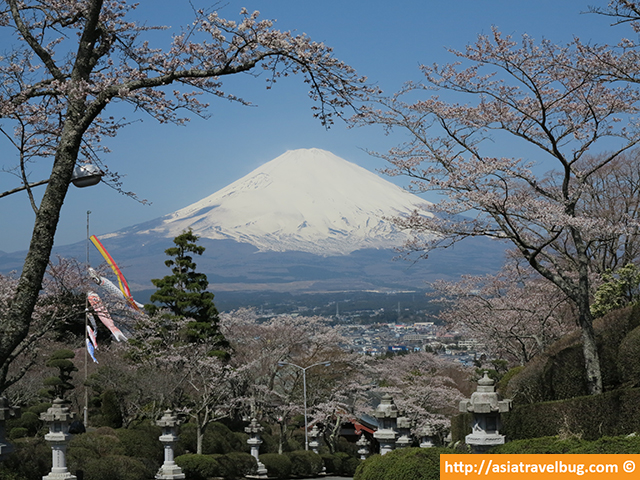 Mount Fuji View from Heiwa Park in Gotemba During Spring