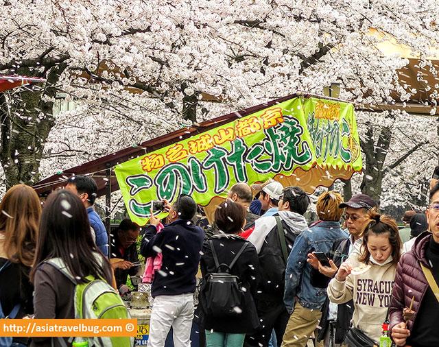 Cherry Blossom Blizzard at Sakuranomiya Park Osaka